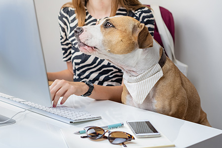dog in front of computer